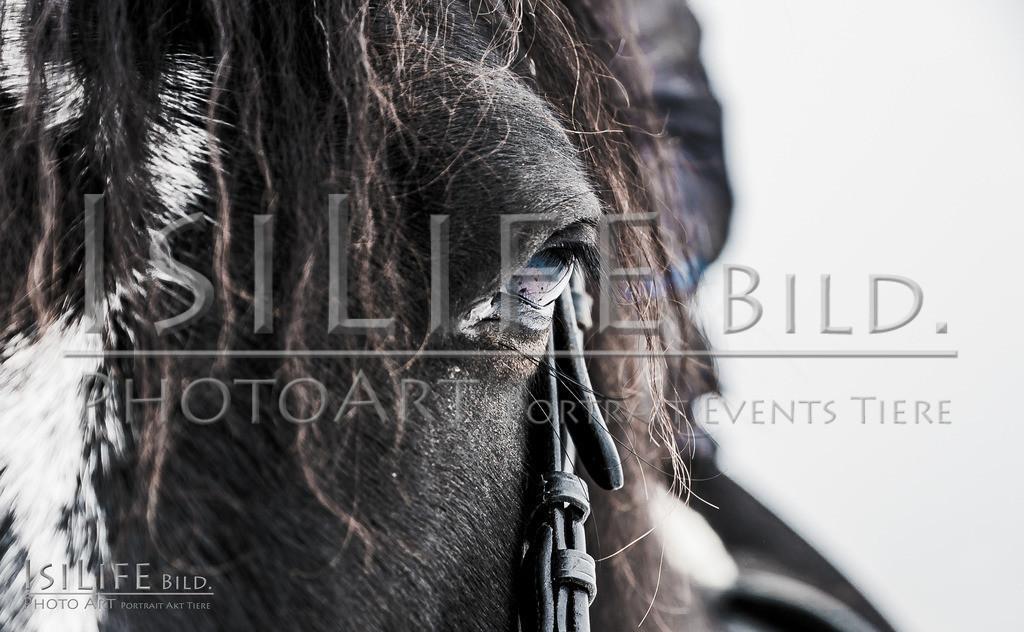 20210104-IsiLife-A9_04830