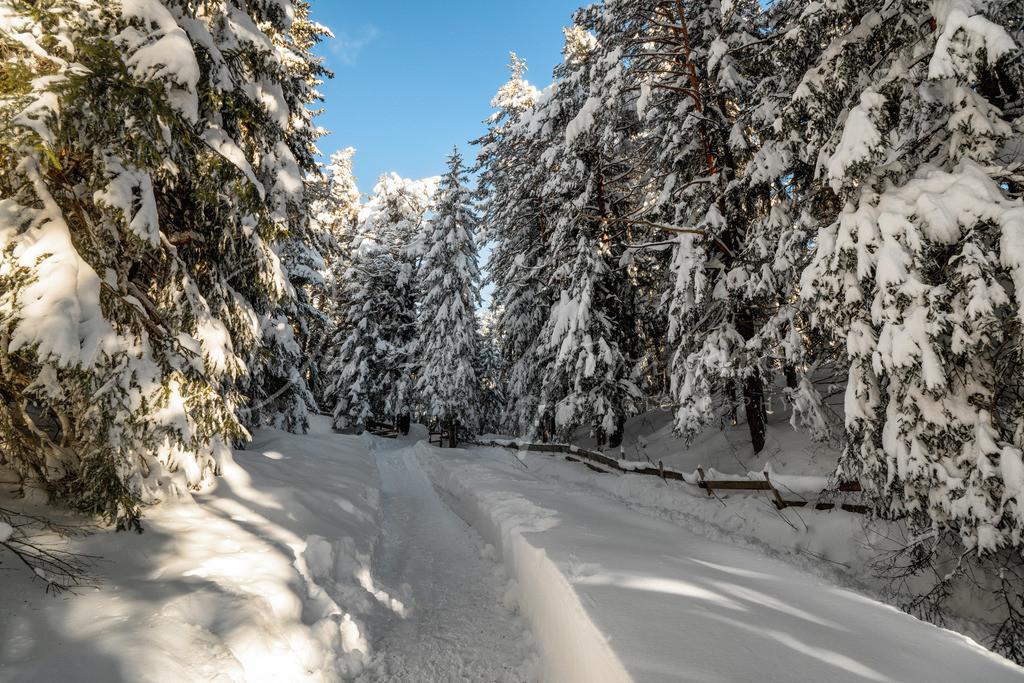Winterspaziergang | Wintertraum in Mösern