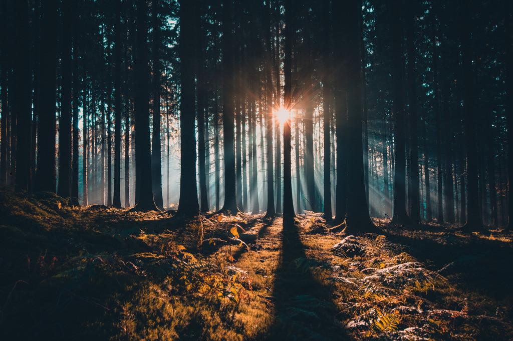 Herbstwald am Geisberg