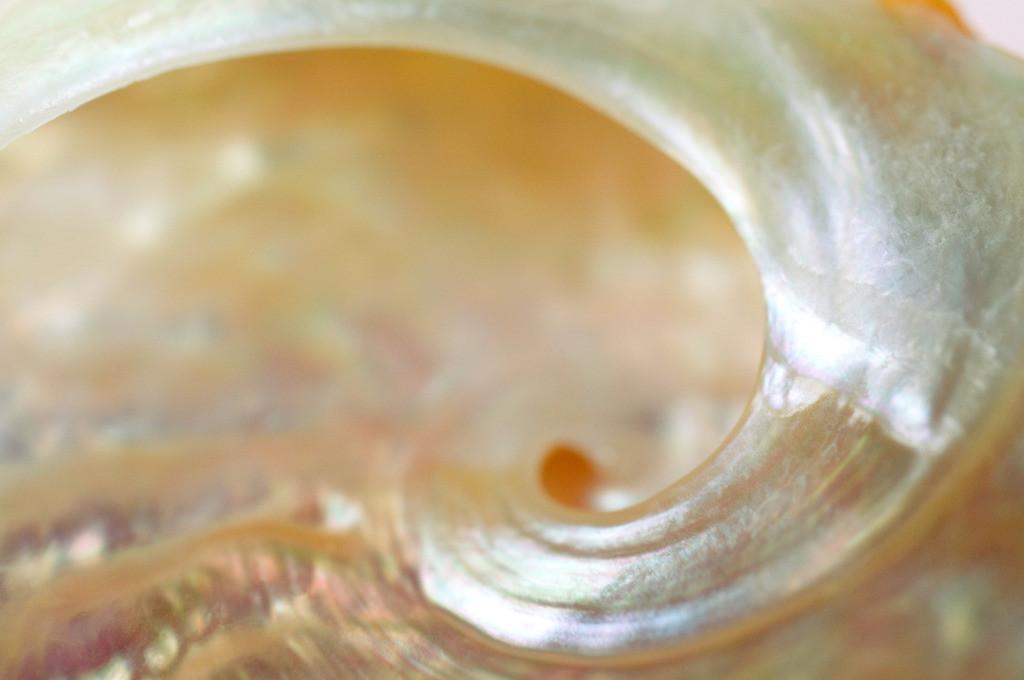 Best. Nr. metall03 | Perlmuttfarbene geschwungene Muschelschale | Zum Element Metall gehört der Westen, seine Jahreszeit ist der Herbst, seine Farben sind weiß, silber und gold, gerne auch glänzend. Es kommen runde und spiralige Formen in Frage. Metall repräsentiert Klarheit, Ordnung und Distanz und steht mit Erfolg und Reichtum in Verbindung. Daher eignet es sich besonders auch für Geschäftsräumlichkeiten, Büros oder Anwaltskanzleien.