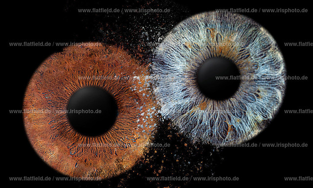 Iris-foto-Beispiel-561