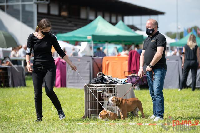 Hundeausstellung CACIB Fehraltorf SUMMER | CACIB Fehraltorf SUMMER in Fehraltdorf  27.08.2021 Foto: Leo Wyden