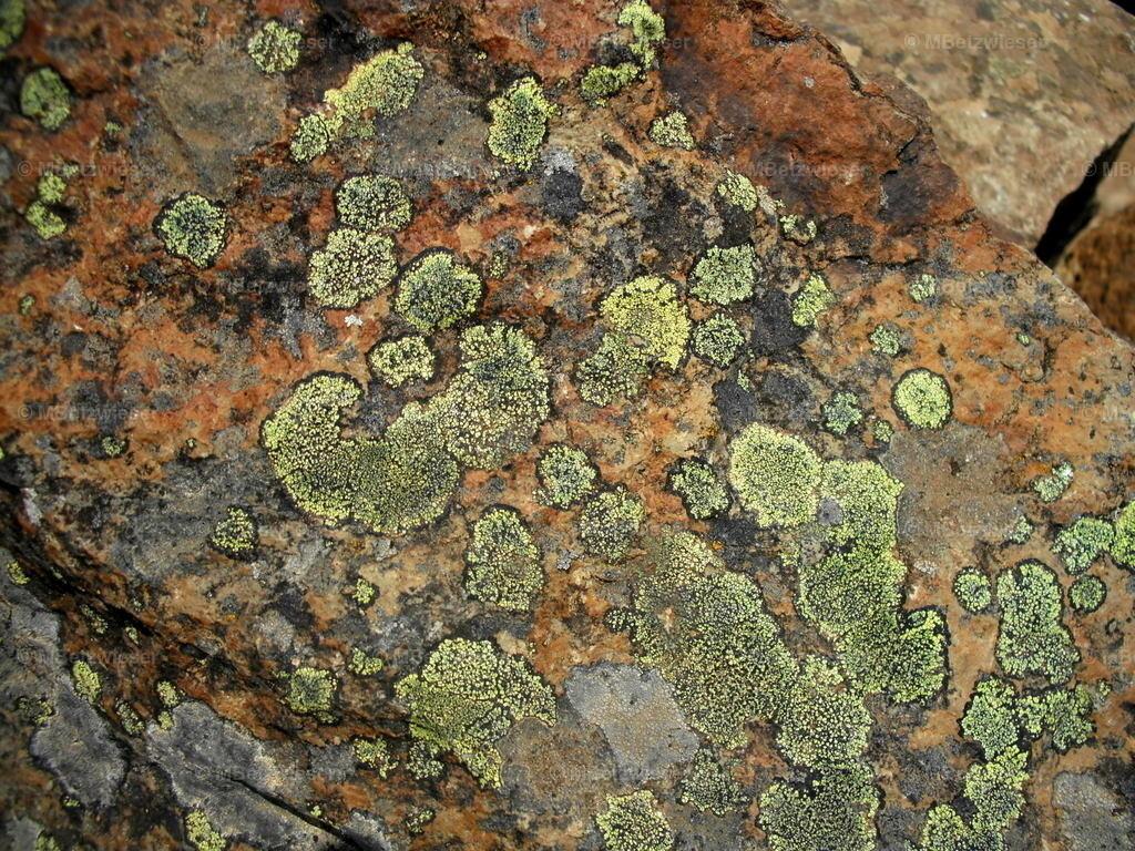 DSCF0072-1 | Bunter Moos auf Steinplatte