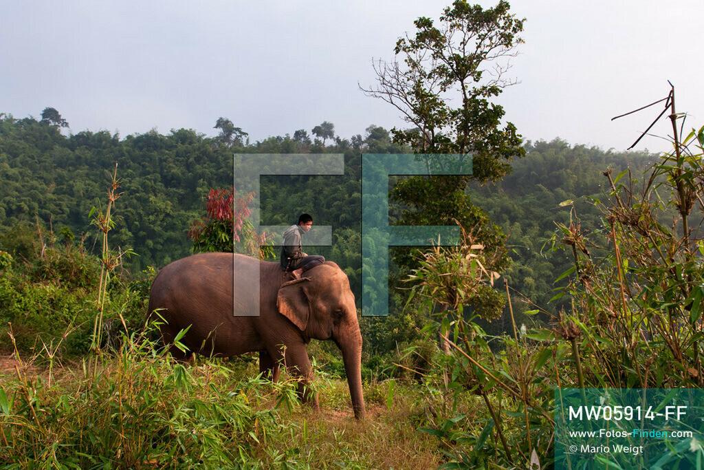 MW05914-FF   Thailand   Goldenes Dreieck   Reportage: Mahut und Elefant - Ein Bündnis fürs Leben   Mahut auf seinem Elefant im Dschungel  ** Feindaten bitte anfragen bei Mario Weigt Photography, info@asia-stories.com **