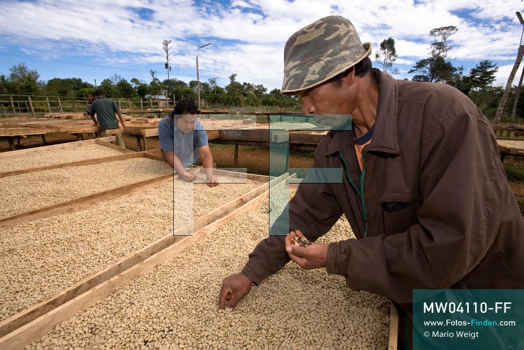 MW04110-FF   Laos   Paksong   Reportage: Kaffeeproduktion in Laos   Die gewaschenen Kaffeebohnen werden in der Sonne getrocknet und aussortiert. In den Plantagen auf dem Bolaven-Plateau gedeihen Sträucher der Kaffeesorten Robusta und Arabica.  ** Feindaten bitte anfragen bei Mario Weigt Photography, info@asia-stories.com **