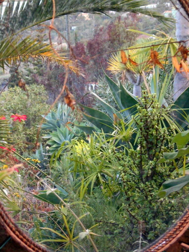 DSCN0040 | Garten auf La Palma gespiegelt