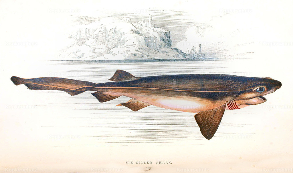 A-History-of-the -Fishes- of- the- British-Islands-Fische-1862-1866 (10)