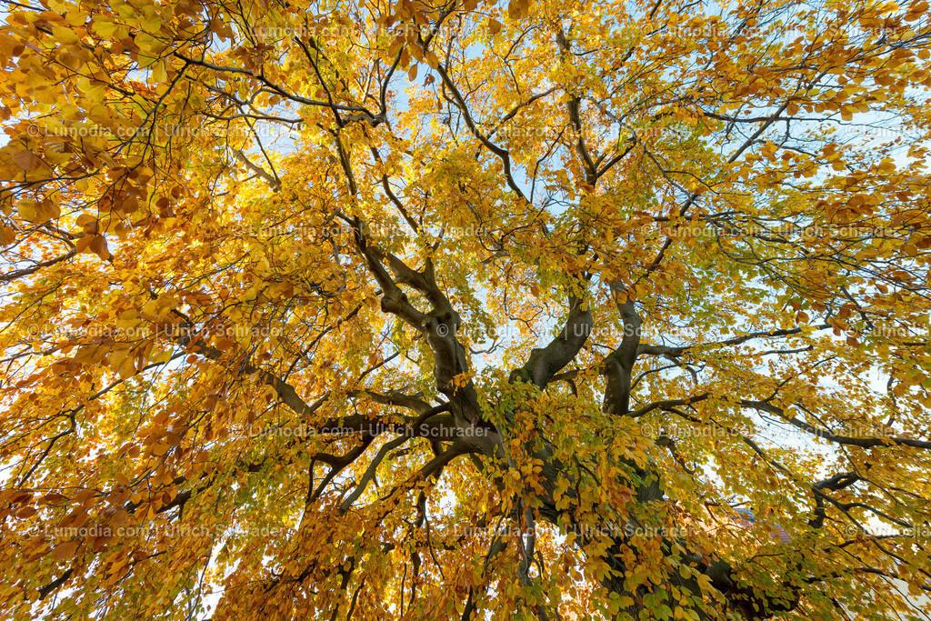 10049-10190 - Herbstbaum | max. Auflösung 7360 x 4912