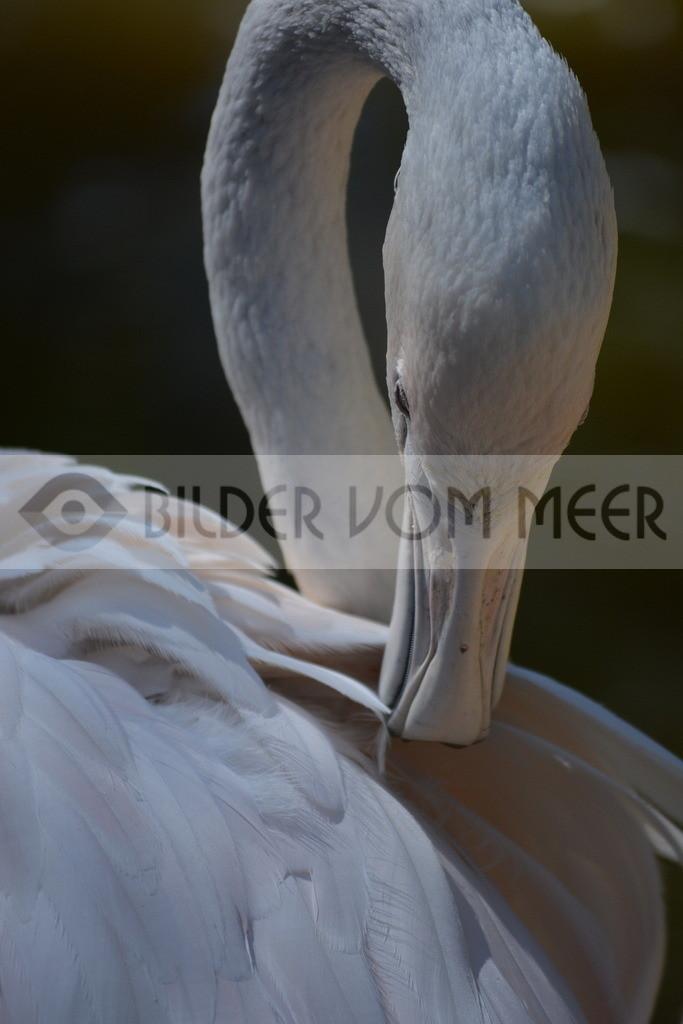 Flamingo Art Bilder | Rosaflamingo Art Bilder