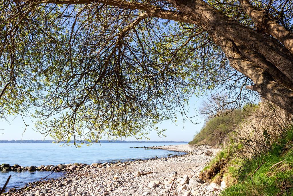 Steilküste in Kleinwaabs | Baum an der Steilküste im Frühling