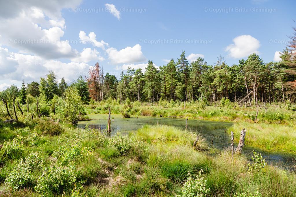 Tister Bauernmoor 1   Das Tister Bauernmoor ist ein Hochmoor und Naturschutzgebiet in Niedersachsen. Es hat eine Größe von 570 ha und gehört zu dem großen Hochmoorgebiet Ekelmoor. Das Moor liegt in der Nähe des Ortes Tiste, einer Gemeinde in der Samtgemeinde Sittensen im Landkreis Rotenburg (Wümme) und gehört zu dem Naturraum der Wümmeniederung. Das Moor bietet Brut- und Rastplätze für viele, zum Teil seltene Vogelarten und ist einer der bedeutendsten Kranichplätze im nordwestdeutschen Flachland.