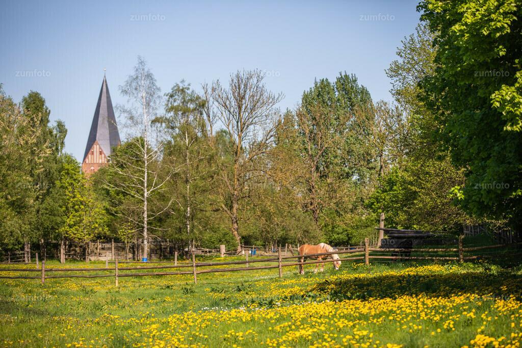 0-180508_1551-2392 | Pferd auf Butterblumenwiese mit Nikolaikirche von Röbel (Müritz) im Hintergrund