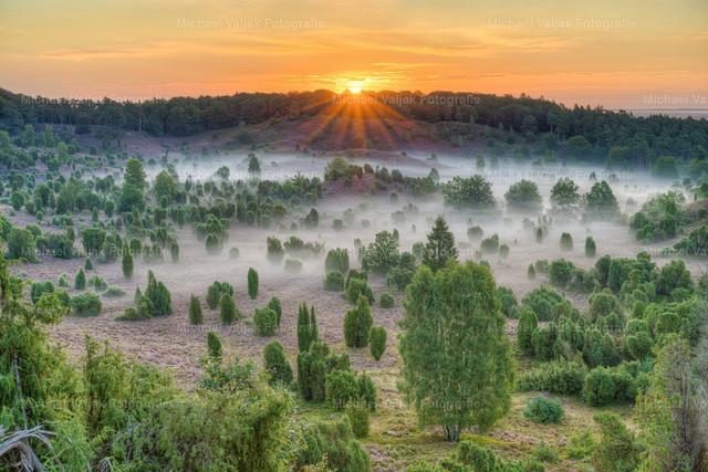Sonnenaufgang über dem Totengrund in der Lüneburger Heide | Blick über den Totengrund in der blühenden Lüneburger Heide im Spätsommer. Nebel liegt über dem Boden und die Sonne kommt langsam hinter dem Wald empor.