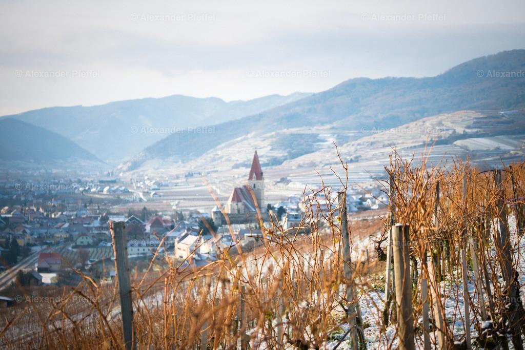 wachau_winter_weingarten_(c)apfeffel_ (37)