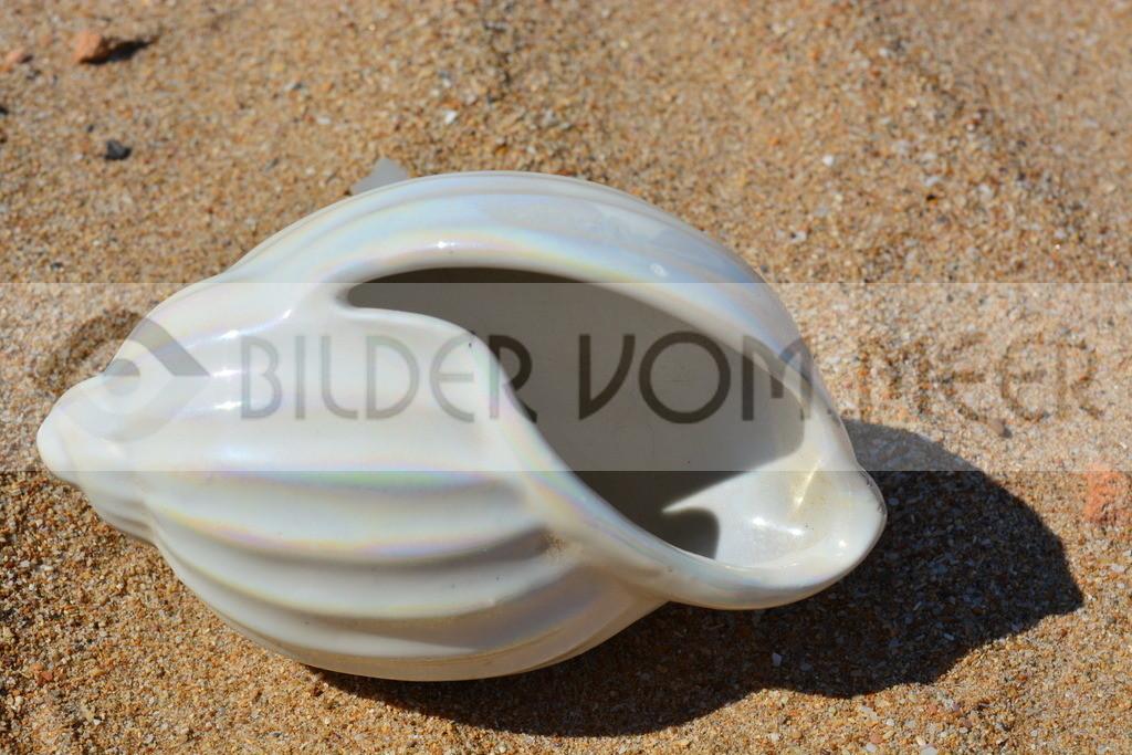Muschel Bilder im Sand   Muschelbilder vom Meer