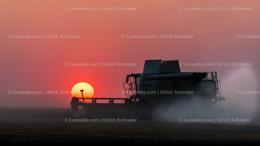 10049-10391 - Getreideernte bei Badersleben