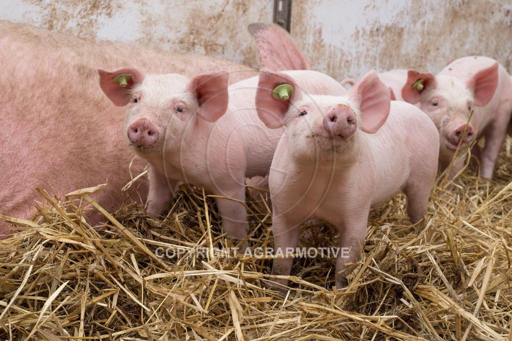 20160705-IMG_7945 | glückliche Schweine