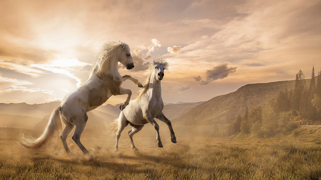 Horse Fight