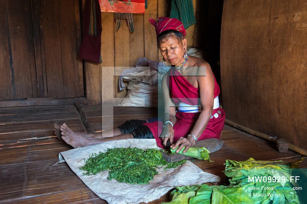MW09929-FF | Myanmar | Loikaw | Reportage: Loikaw im Kayah State | Kayah-Frau schneidet frische Tabakblätter. Die ethnische Minderheit der Kayah lebt im Dorf Daw Ta Ma Gyi. Nur die Frauen tragen noch traditionelle Kleidung und Kopfschmuck. Besonderes Merkmal sind die schwarz lackierten Baumwollringe an den Knien.    ** Feindaten bitte anfragen bei Mario Weigt Photography, info@asia-stories.com **