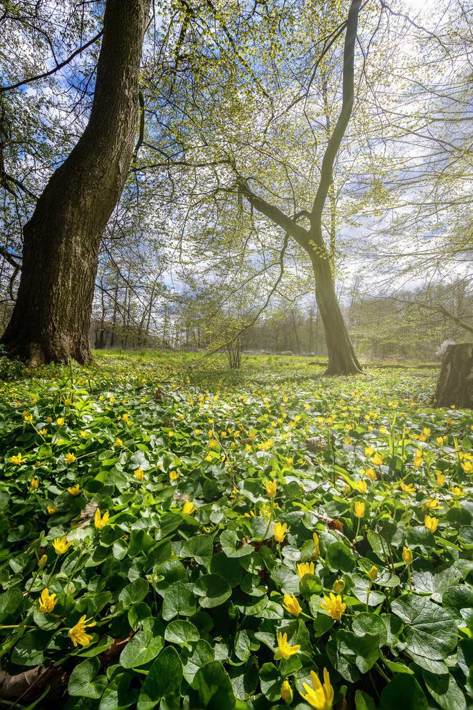 Frühling im Stadtwald