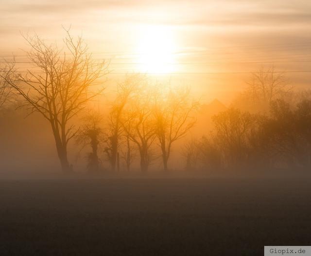 Sonnenaufgang mit Nebel | Sonneenaufgang mit Nebel in Raderbroich