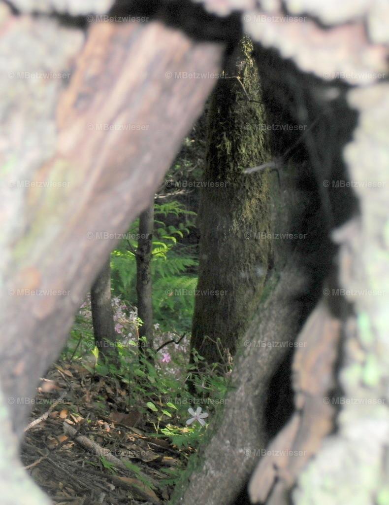 DSCF0084-4 | Baumhöhle mit Ausgang