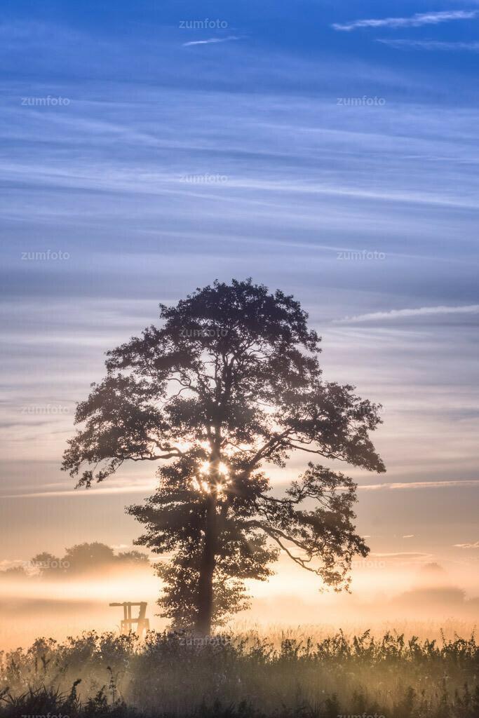0-100905_0654-9415-17 | Sonnenaufgang im Nebel --3806 x 2537 Pixel--