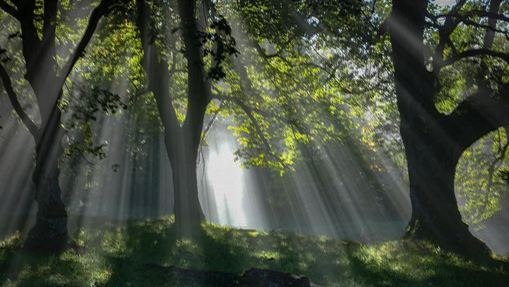 Nebelwald | der perfekte Moment