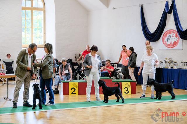 SCSP, CAC Clubschau   Alle Schweizerischer Club für Schnauzer und Pinscher  SCSP, CAC Clubschau  Salzhaus 3380 Wangen an der Aare.  23.06.2019 Foto: Leo Wyden