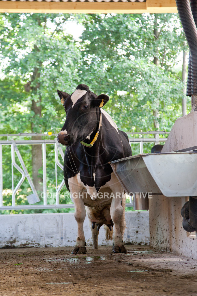 20110627-IMG_3065 | Milchkühe im Boxenlaufstall