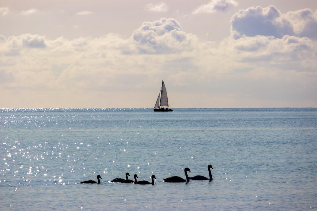 Sommer am Meer | Segelboot vor Damp mit Schwanenfamilie im Vordergrund