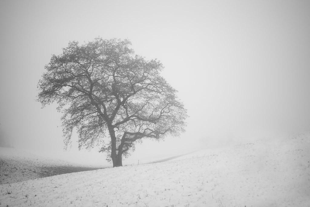 Myste Tree | Winterlicher Baum im Nebel