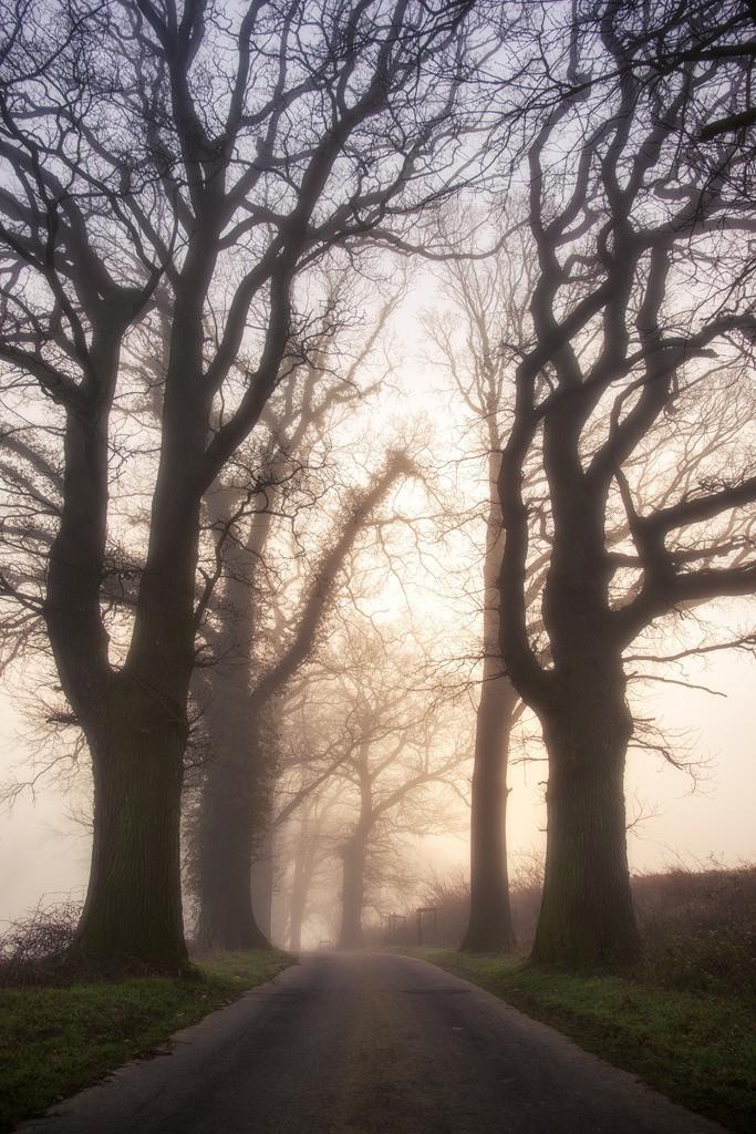 Oak Alley   Neblige Morgenstimmung in der Eichenallee.