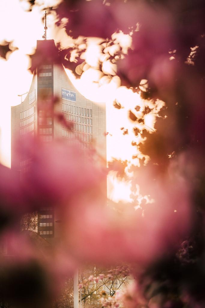 Kirschblüten Johannisplatz 2020 (3)