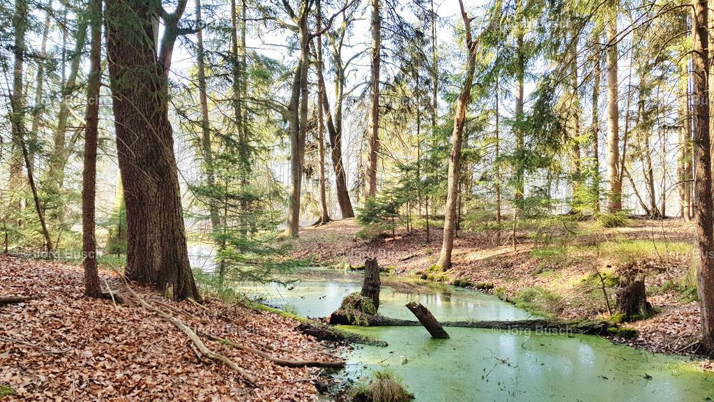 Wald_11