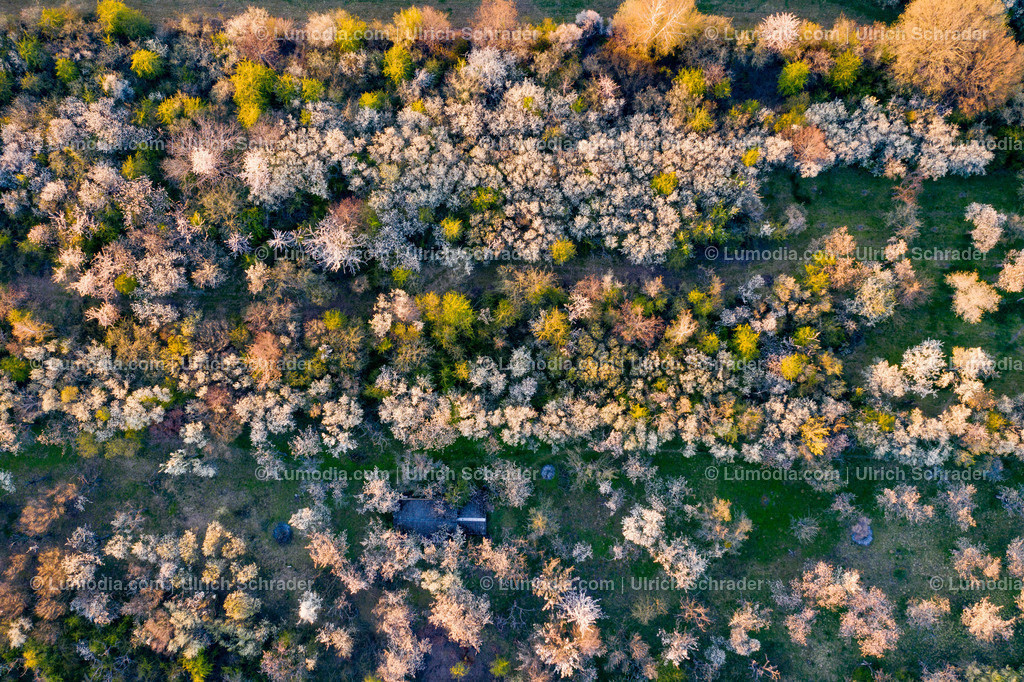 10049-51352 - Kirschblüte bei Eilenstedt