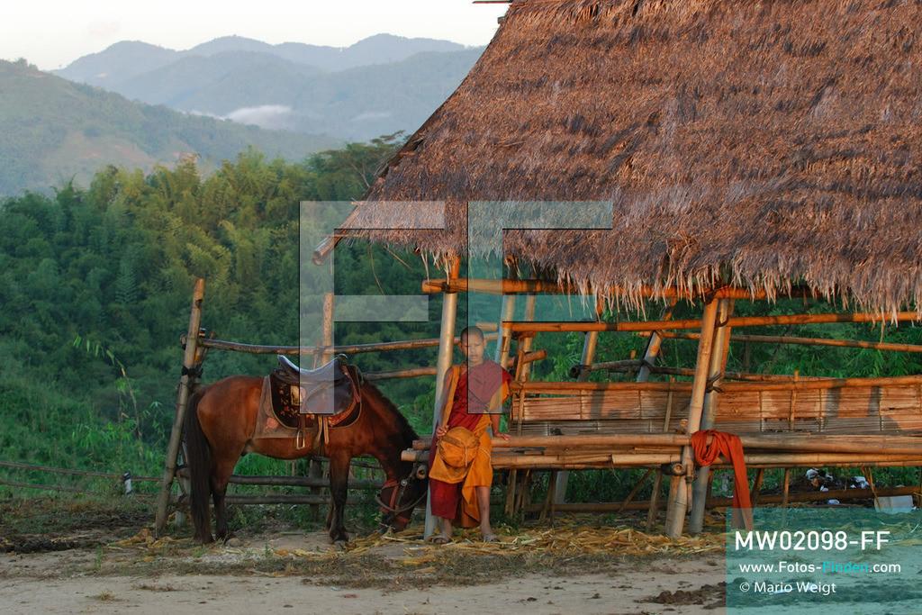 MW02098-FF   Thailand   Goldenes Dreieck   Reportage: Buddhas Ranch im Dschungel   Der junge Mönch Pansaen auf der Pferdekoppel  ** Feindaten bitte anfragen bei Mario Weigt Photography, info@asia-stories.com **