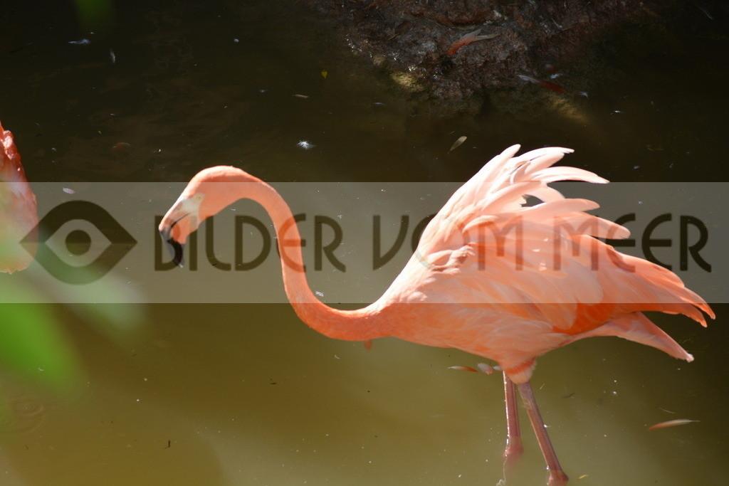 Flamingo Art Bilder | Roter Flamingo Art Bilder
