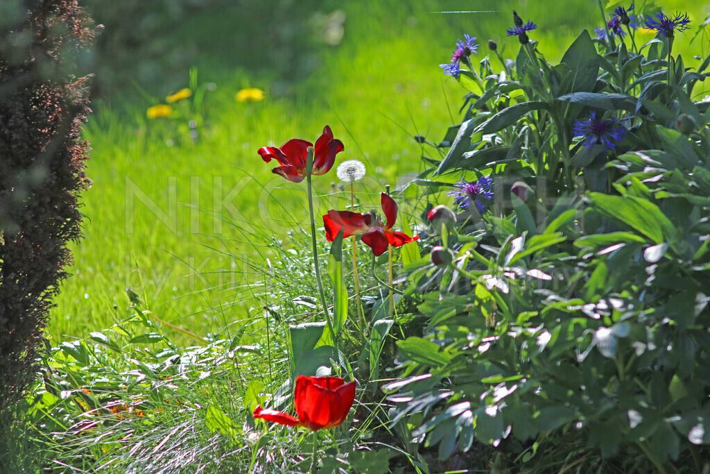 Gartenzauber   Pflanzenvielfalt im Garten.