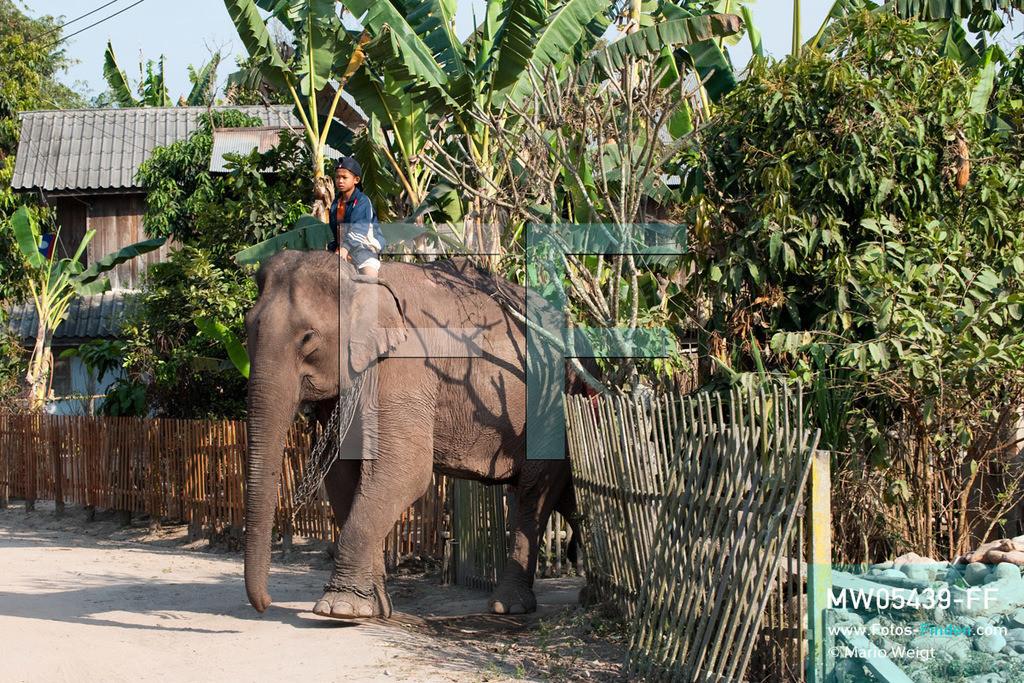 MW05439-FF | Laos | Provinz Sayaboury | Vieng Keo | Reportage: Pey Wan im Elefantendorf | Pey Wan reitet auf dem Elefant Boun Van durch das Dorf.  Der achtjährige Pey Wan lebt im Elefantendorf Vieng Keo im Nordwesten von Laos. Im Dorf wohnen ca. 500 Leute mit 17 Arbeitselefanten. Sein Vater Hom Peng hat einen 31 Jahre alten Elefantenbullen namens Boun Van, mit dem er im Holzfällercamp im Dschungel arbeitet. Zum Elefantenfest schmückt Pey Wan den Jumbo und darf mit ihm an der Prozession durchs Dorf teilnehmen. Pey Wan möchte, wie sein Vater, später auch Elefantenführer werden.  ** Feindaten bitte anfragen bei Mario Weigt Photography, info@asia-stories.com **
