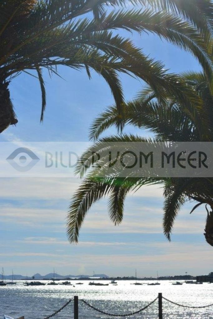 Fotoausstellung Bilder vom Meer | Tanz der Palmenwedel am Meer