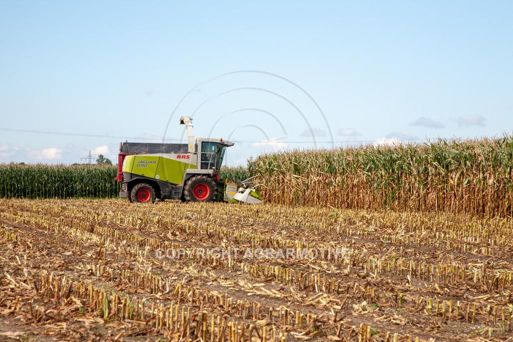 20080914-IMG_8932 | Silomais wird gehäckselt - AGRARFOTO Bilder aus der Landwirtschaft