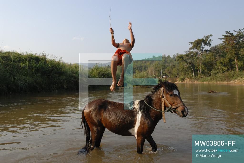MW03806-FF | Thailand | Goldenes Dreieck | Reportage: Buddhas Ranch im Dschungel | Junger Mönch springt vom Pferd in den Fluss.  ** Feindaten bitte anfragen bei Mario Weigt Photography, info@asia-stories.com **