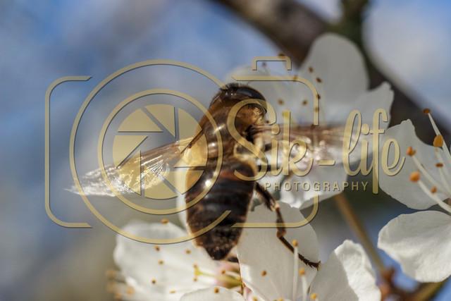 Fleißiges Bienchen 11