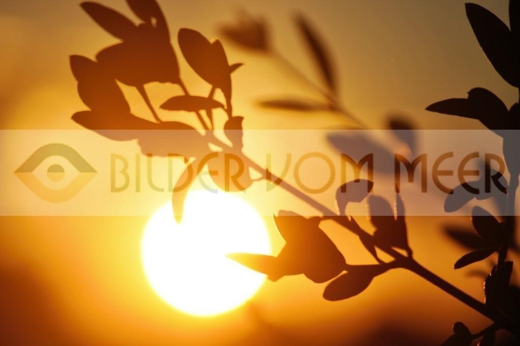 Bilder Sonnenuntergang   Sonnenuntergang in der Steppe, Spanien
