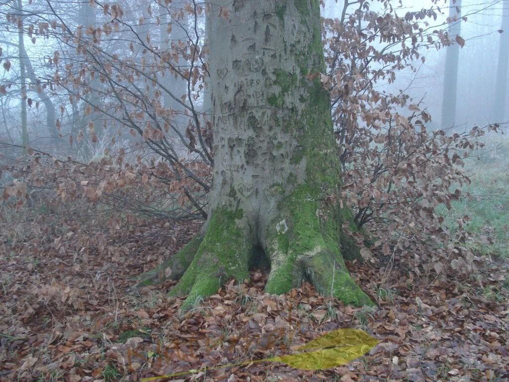 Lebensspuren am Kraftbaum