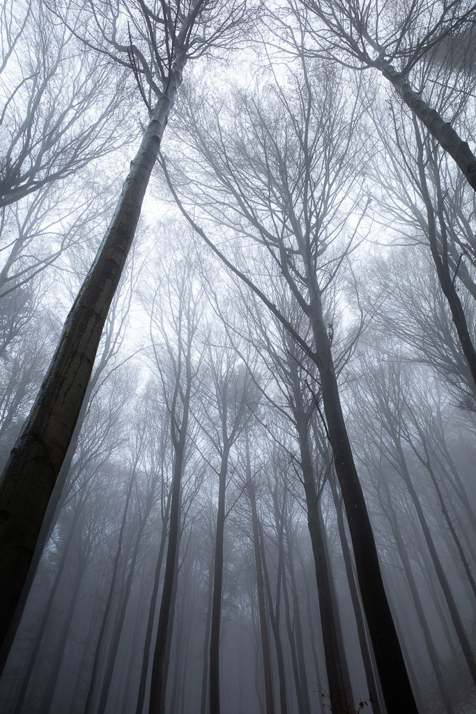 Forrest in the fog (I)