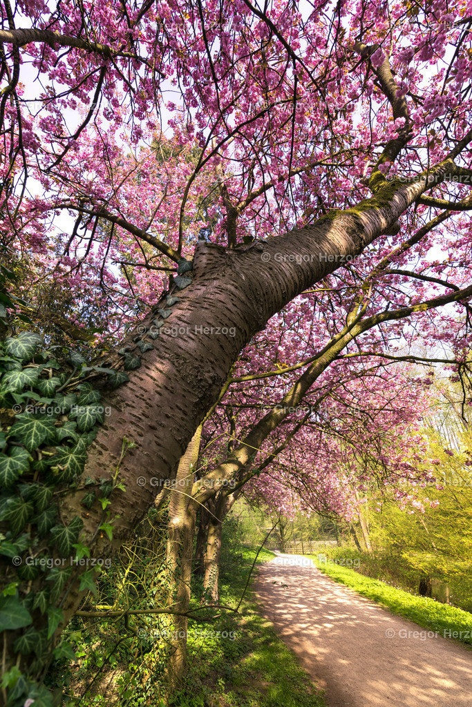 Frühling im Schlossgarten Münster