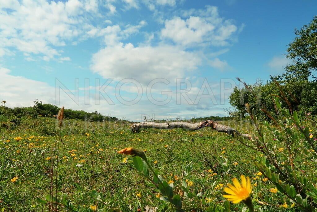 De Muy   Das Naturschutzgebiet De Muy auf der niederländischen Nordseeinsel Texel.