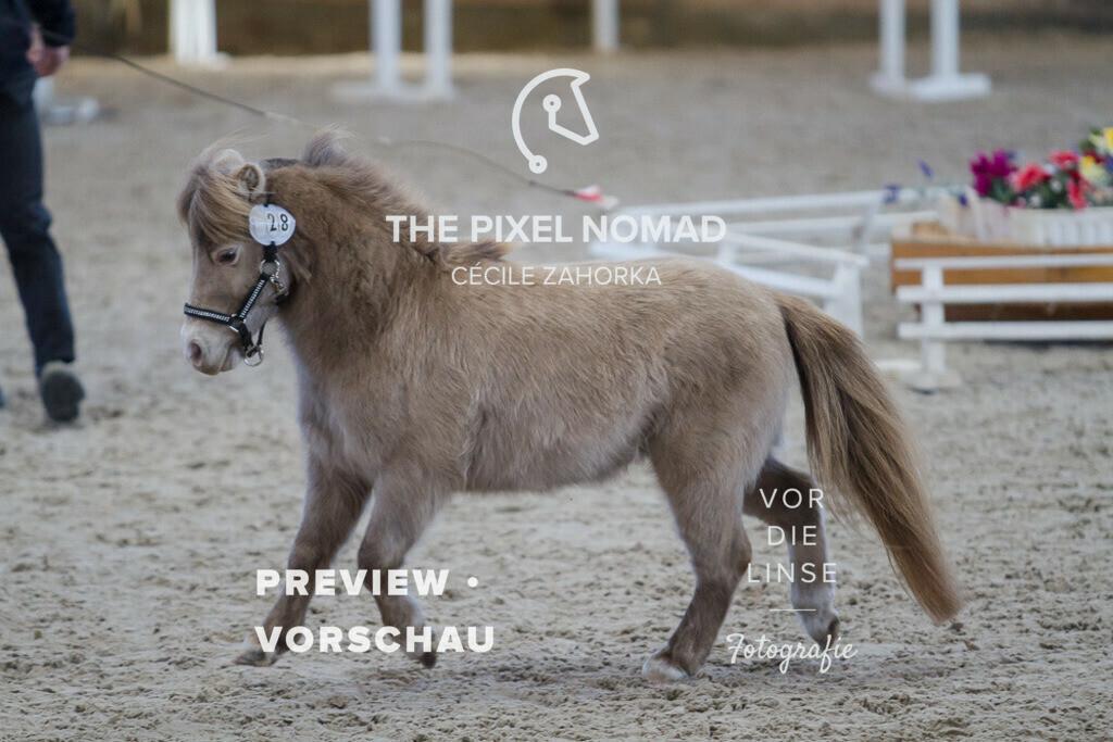 170204-28-AMH-LMSJoopClassic11 | LMS Joop Classic von Solarwind Armani Echo aus der Serenity Acres Chanel 43 Cocoa von Ridgehavens Cocoa / American Miniature Horse